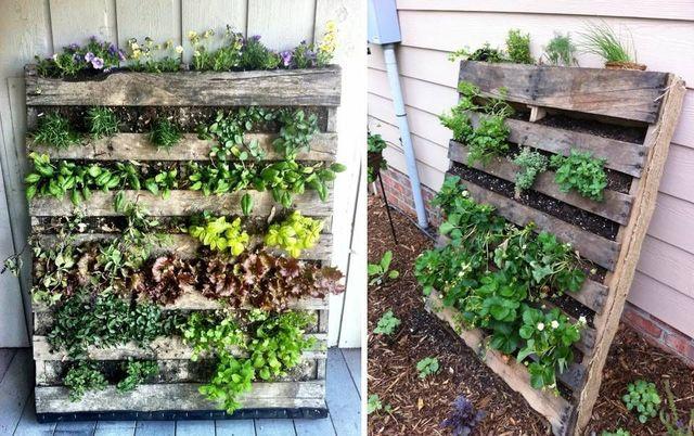 Come-fare-il-verde-verticale-fai-da-te