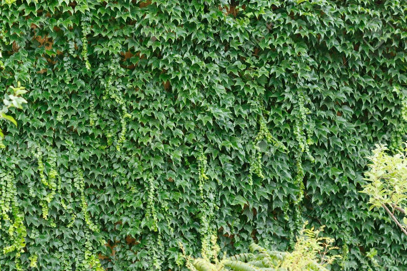 Giardini Verticali Fai Da Te giardini verticali life panel - news e consigli - giardini
