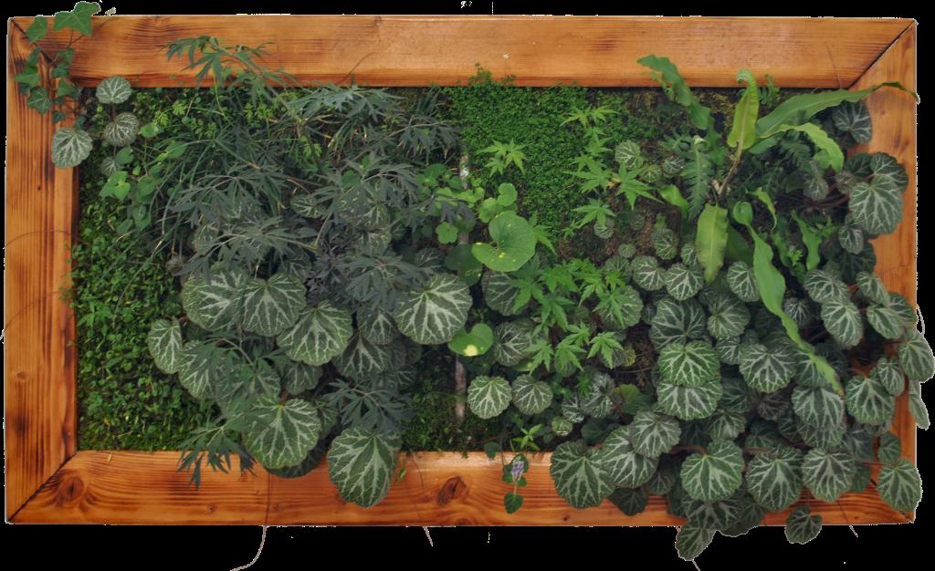 Non-solo-sito-web,-compra-il-tuo-giardino-online
